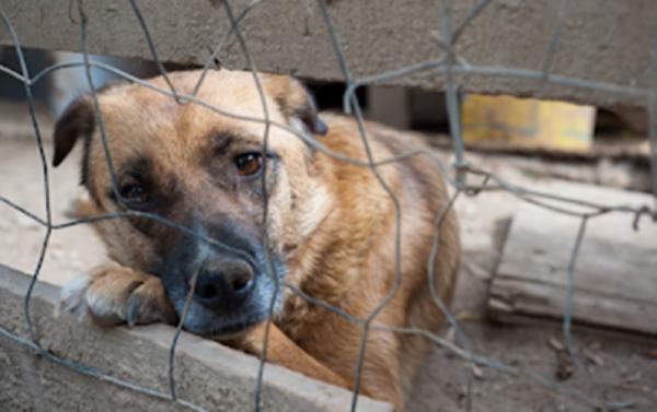 Αυτόφωρο για όποιον βασανίζει τα ζώα με εγκύκλιο του Αρείου Πάγου 1