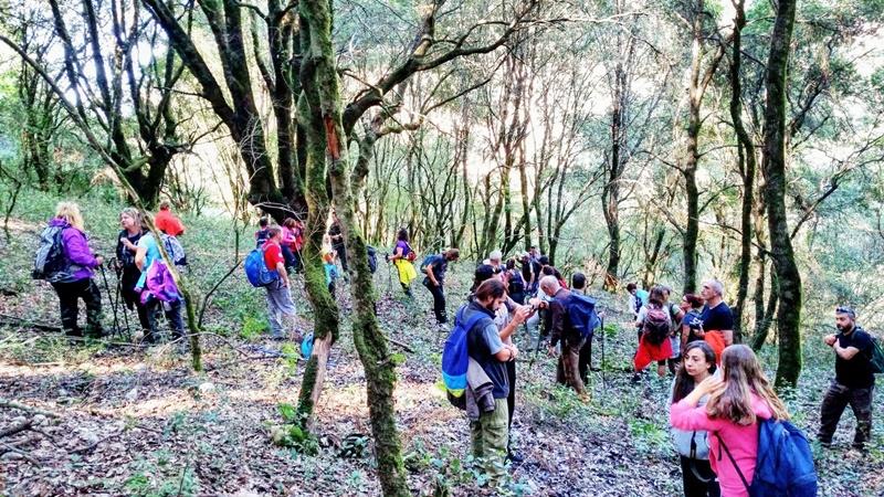 ΕΟΣ Καλαμάτας: Πεζοπορία στο δάσος της Φολόης την Κυριακή 25/11/2018 28