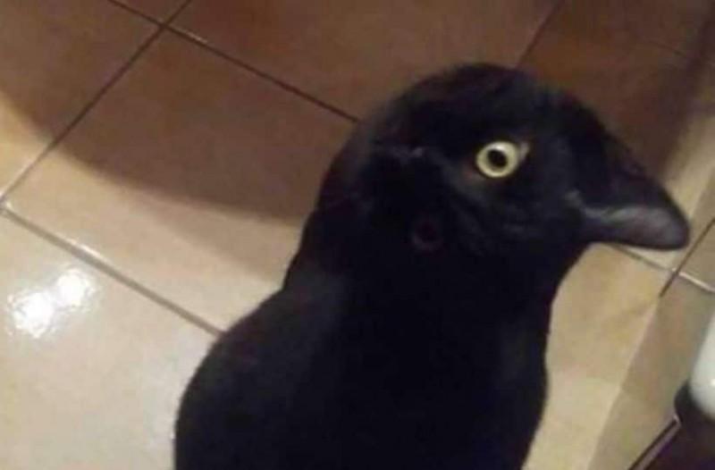Βλέπεις ένα κοράκι ή ένα μια γάτα; Η νέα σπαζοκεφαλιά που έχει μπερδέψει το ίντερνετ! 26