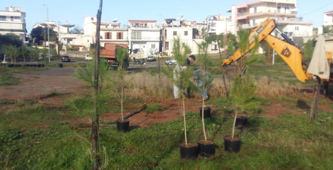 Δενδροφύτευση από τον Δήμο Καλαμάτας στο Φραγκοπήγαδο 6