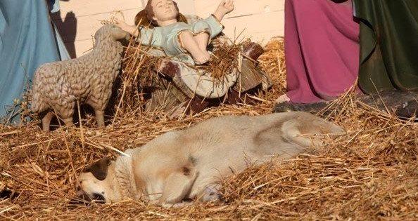 Μαγνησία: Δηλητηρίασαν με φόλα αδέσποτο σκυλάκι που είχε βρει καταφύγιο στην χριστουγεννιάτικη φάτνη 3