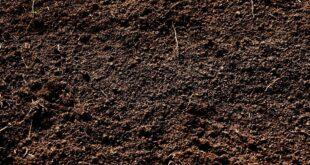 Παχυσαρκία: Η κατανάλωση χώματος μπορεί να είναι η θεραπεία