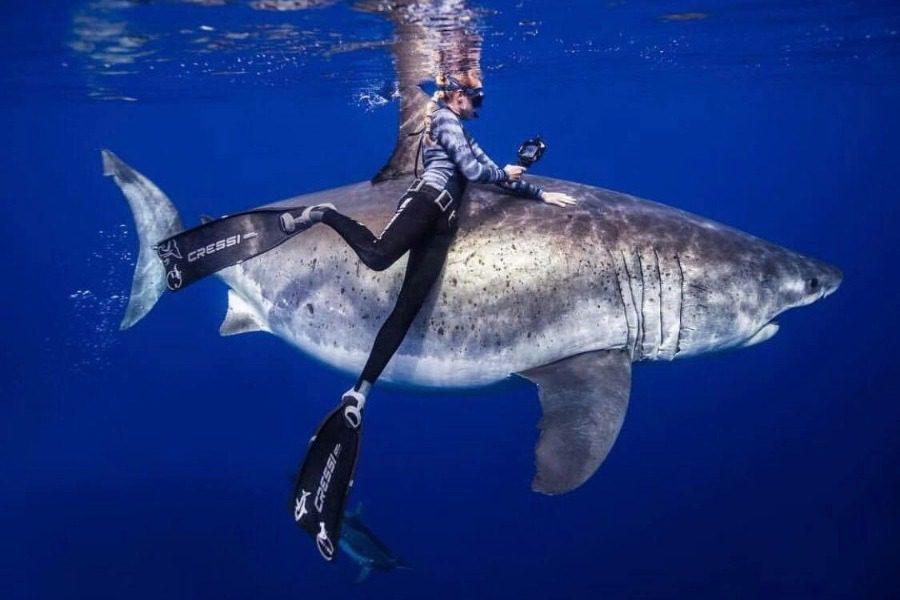 Πανέμορφα πλάνα: Δύτες κολύμπησαν πλάι σε λευκό καρχαρία 6 μέτρων 27