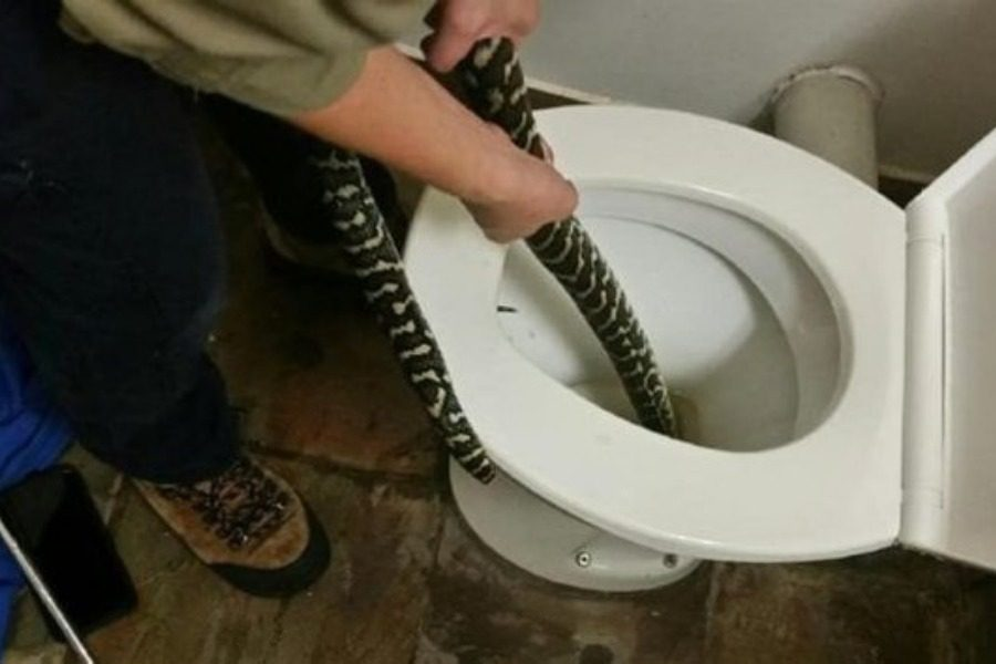 Φίδι αναδύθηκε από την τουαλέτα και δάγκωσε γυναίκα 4