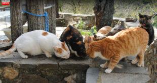 Πανελλήνια οργή: Γυναίκα σκοτώνει γάτες και δίνει συνταγές για φόλες στο Facebook
