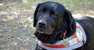 Πέθανε η Λάρα - Ήταν ο πρώτος σκύλος οδηγός τυφλών στην Ελλάδα