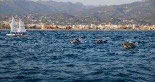 Καλαμάτα: Εντυπωσιακή φωτογραφία με δελφίνια που παίζουν δίπλα σε σκάφη!