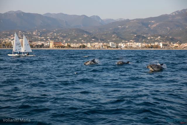 Καλαμάτα: Εντυπωσιακή φωτογραφία με δελφίνια που παίζουν δίπλα σε σκάφη! 3
