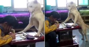 Πατέρας εκπαίδευσε το σκύλο του να επιβλέπει την κόpη του για να μη σηκώνει κεφάλι από τα μαθήματά της