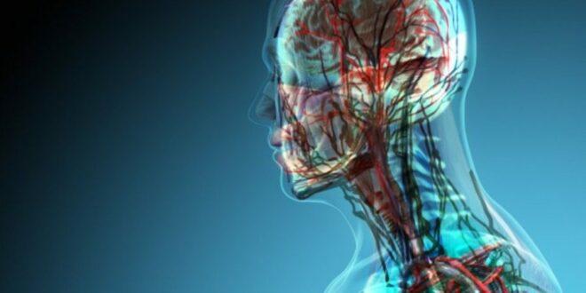 Το μισό σώμα του ανθρώπου δεν είναι ανθρώπινο