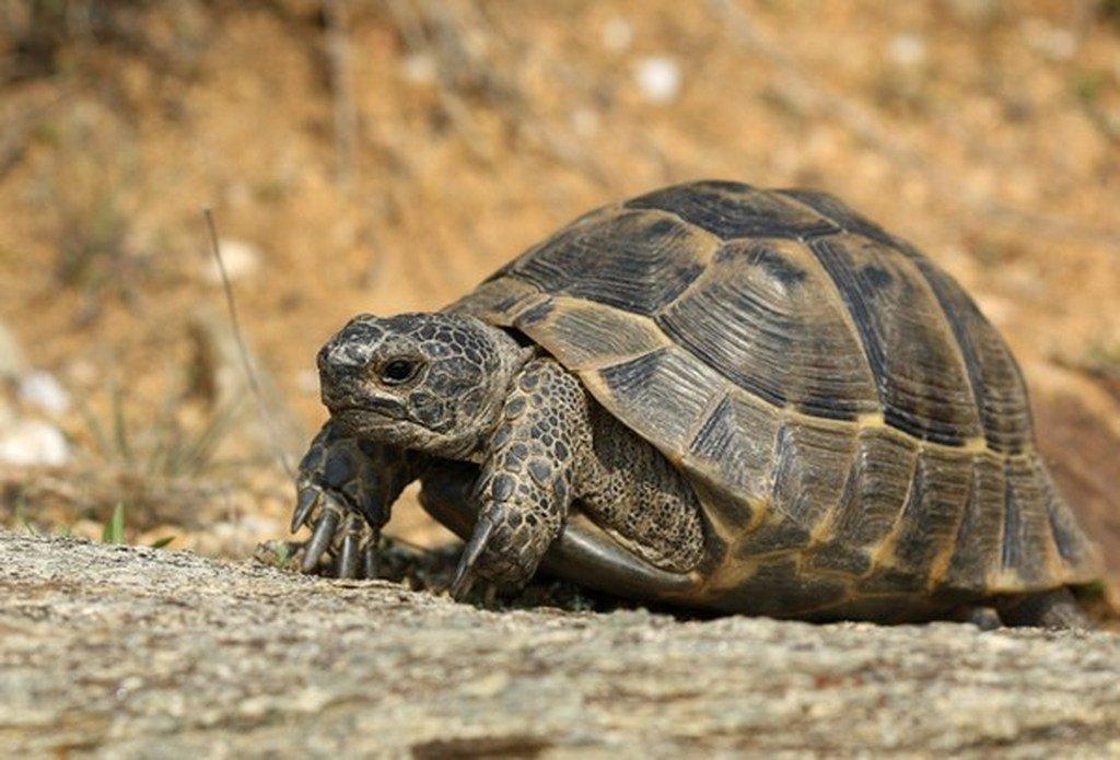 Ανέκδοτο: Η χελώνα 1