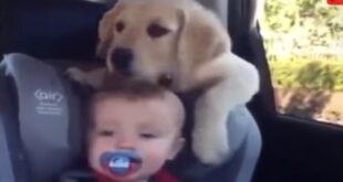 Ξεκαρδιστικά σκηνικά με μωράκια και σκυλάκια! (vid)