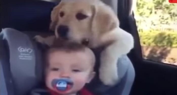Ξεκαρδιστικά σκηνικά με μωράκια και σκυλάκια! (vid) 22