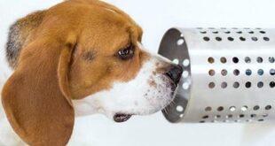 Σκύλοι μύρισαν τον καρκίνο του πνεύμονα με ακρίβεια 97%