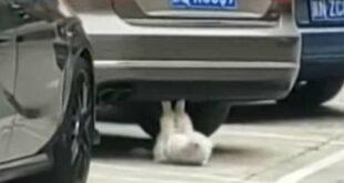 Γάτα κάνει… κοιλιακούς και γίνεται το απόλυτο viral video