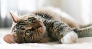 Σάλος στην Αυστραλία: Θέλουν να σκοτώσουν δύο εκατομμύρια γάτες μέχρι το 2020!