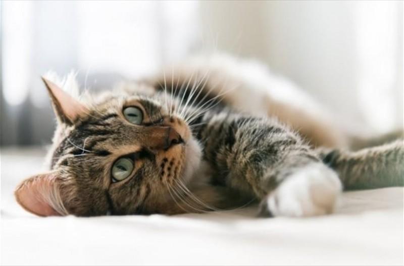 Σάλος στην Αυστραλία: Θέλουν να σκοτώσουν δύο εκατομμύρια γάτες μέχρι το 2020! 1