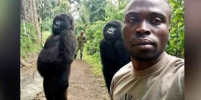 Επική σέλφι στο Κογκό με… δύο γορίλες