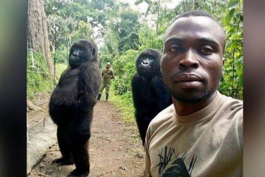 Επική σέλφι στο Κογκό με... δύο γορίλες 4