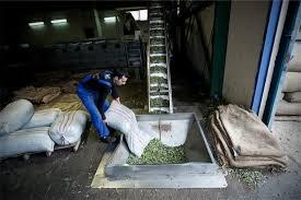 Στο… ναδίρ η τιμή του λαδιού με το 50% να παραμένει αδιάθετο στη Μεσσηνία 2