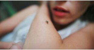 Τι να κάνετε φέτος για να μην σας τσιμπάνε τα κουνούπια