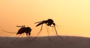 Προγραμματισμός ψεκασμών εναντίον κουνουπιών