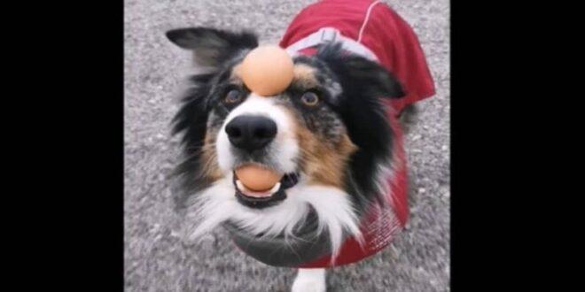 Ο σκύλος ζογκλέρ που έχει γίνει viral! (video)