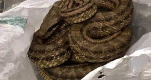 Θεσσαλονίκη: Φίδι βρέθηκε σε ψυγείο καταστήματος εστίασης