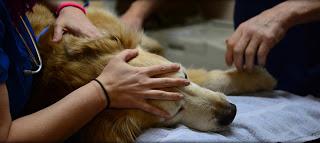 Έκαναν ευθανασία σε υγιή σκύλο για να ταφεί μαζί με την ιδιοκτήτρια