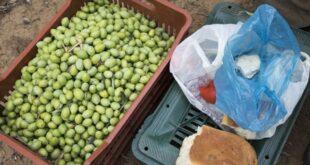 h Ελλάδα ζητεί από τις Βρυξέλλες στήριξη των ελαιοπαραγωγών