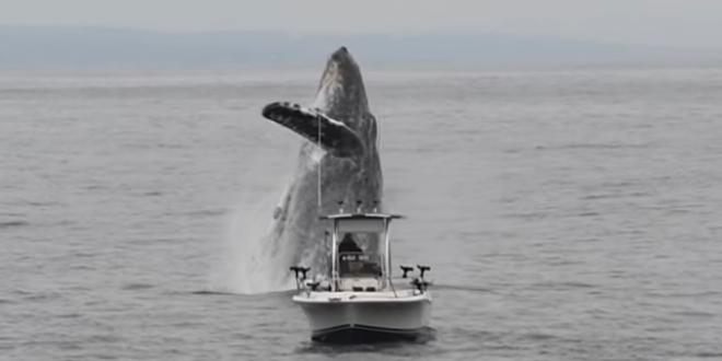 Η εντυπωσιακή λήψη μίας φάλαινας που κολυμπάει πλάι σε βάρκα ψαρά