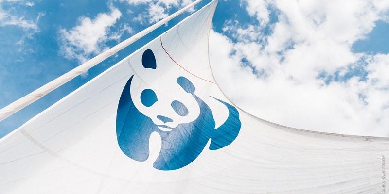 Το καράβι του WWF ξεκινάει το πρώτο ταξίδι του στη Μεσόγειο & την Ελλάδα 5