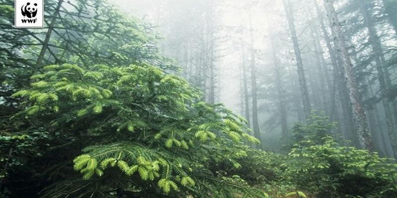 WWF: Ένα μήνα μετά την έναρξη της αντιπυρικής, πόσο προετοιμασμένοι είμαστε; 11