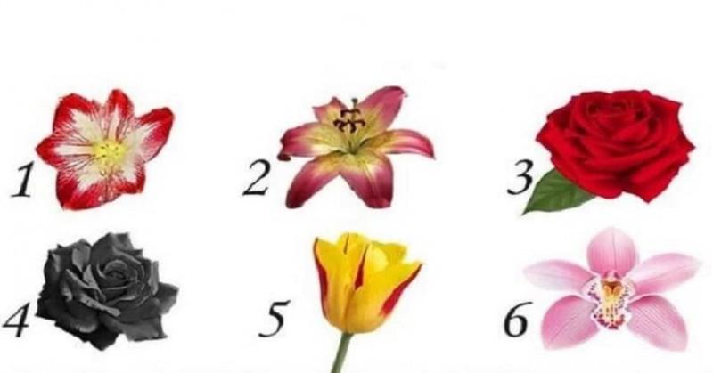 Διάλεξε ένα λουλούδι και μάθε το μυστικό που κρύβει για τον εαυτό σου που δεν γνωρίζεις! 3