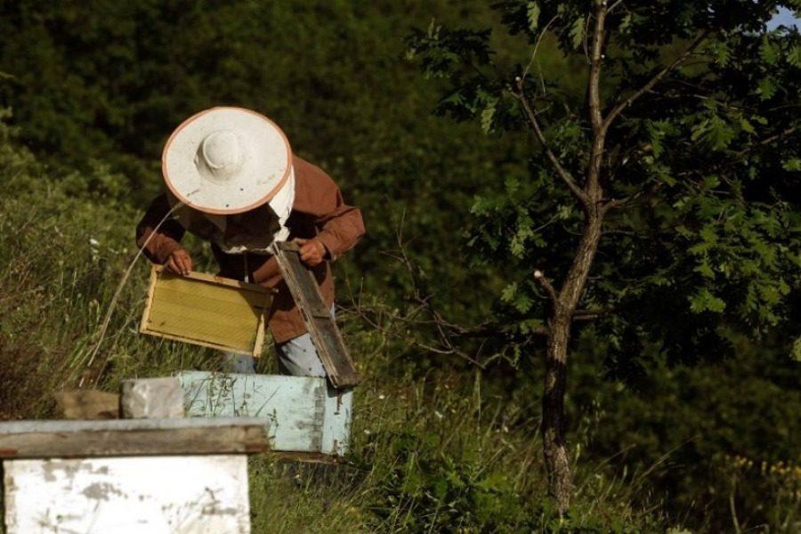 Τραγικός θάνατοs στη Μάνη: Του επιτέθηκαν δεκάδες μέλισσες 2