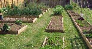 Πρότυπος Δημοτικός Λαχανόκηπος Αειφόρου Καλλιέργειας