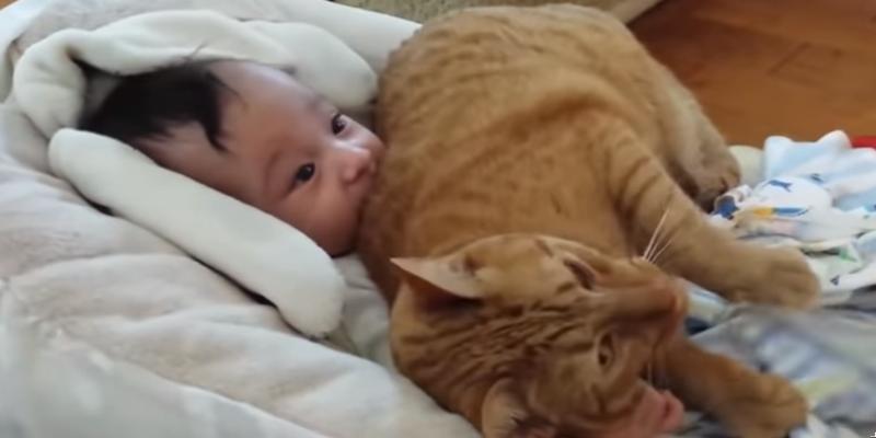 Μωράκια και γατούλες κάνουν πολύ καλή παρέα! (vid) 2