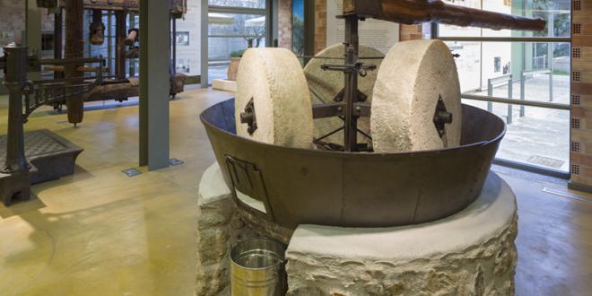 ΠΑΜΕ ΒΟΛΤΑ στο Μουσείο ελιάς και ελληνικού λαδιού