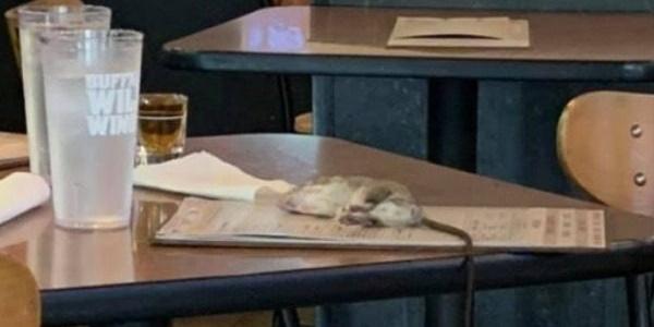 Εφιάλτης... αρουραίος προσγειώθηκε στο τραπέζι πελάτισσας σε εστιατόριο 1