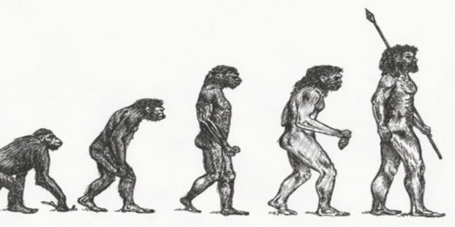 Βρέθηκε στη Μάνη το αρχαιότερο δείγμα Homo Sapiens