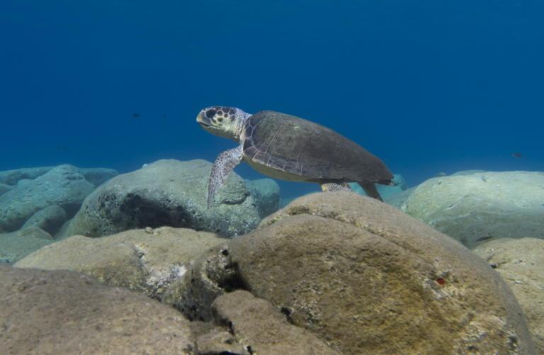 Μάνη: Το παιχνίδι με τις θαλάσσιες χελώνες έκρυβε παγίδες 1