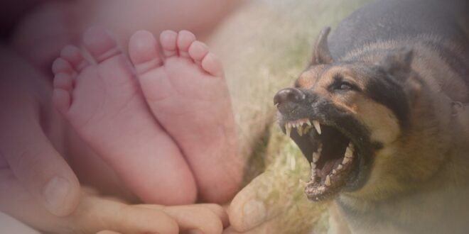 Τραγωδία: Νεκρό μετά από επίθεση σκύλου βρέφος τριών μηνών
