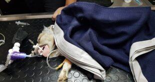 Έκκληση για το σκυλάκι της 50χρονης που έχασε τη ζωή της στην ταβέρνα