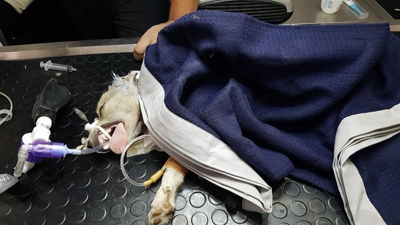 Καλαμάτα: Μαχαίρωσε και προσπάθησε να κάψει ζωντανό το σκυλάκι του παππού και της γιαγιάς του! 14