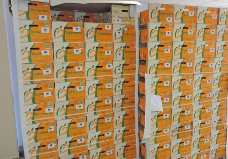20 τόνοι ροδάκινα διανεμήθηκαν σε μαθητές των Νηπιαγωγείων του Δήμου Καλαμάτας