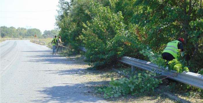 Ο Δήμος Μεσσήνης για κλαδιά και βλάστηση που εμποδίζουν την ασφαλή κυκλοφορία 24