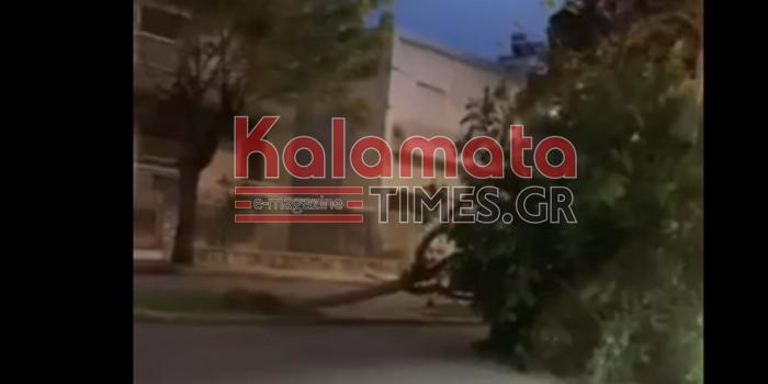 Ισχυροί άνεμοι προκάλεσαν την πτώση δέντρου στην Καλαμάτα 1