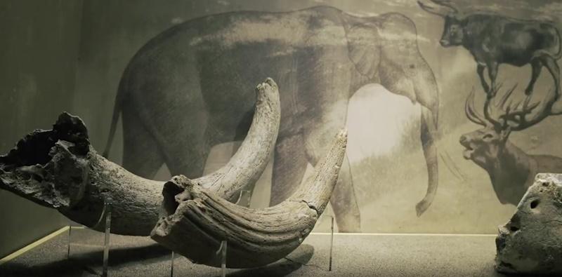 Ντοκιμαντέρ «ΛΑΡΙΣΑ, Η ΠΕΛΑΣΓΙΣ ΣΤΟ ΔΙΑΒΑ ΤΩΝ ΑΙΩΝΩΝ», στο Αρχαιολογικό Μουσείο Μεσσηνίας 5
