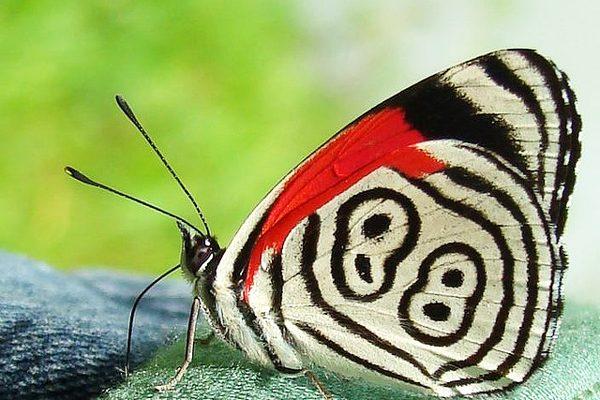 Η «τυχερή» πεταλούδα με το Νο 88… 9