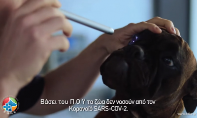 Τα ζώα και ο SARS-Cov2 - Εθελοντική Δράση Κτηνιάτρων Ελλάδας 17